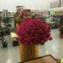 71 роза