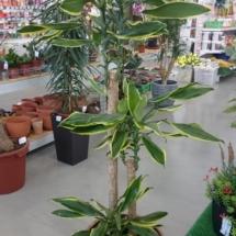 oasis-gc.ru